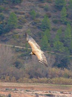 Vulture, Landscape, Fly Over, Bird's Eye View, Priorat