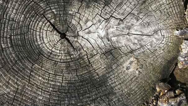 Log, Rings, Tree, Wood, Cut, Weathered, Bracket Fungus