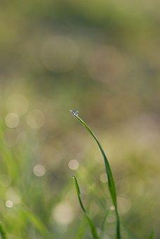 Blade Of Grass, Grass, Halm, Meadow, Dew, Dewdrop