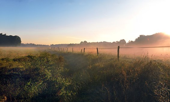 Fence, Fog, Morning, Landscape, Sun, Green, Yellow