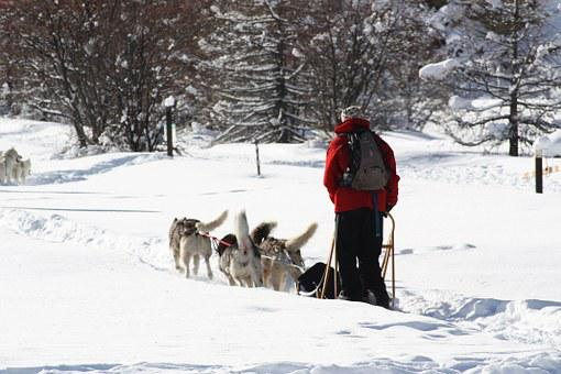 Sled Dogs, Queiras, Snow, Nature, Winter