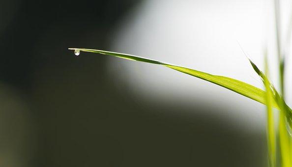 Grass, Blade Of Grass, Meadow, Nature, Green, Rush