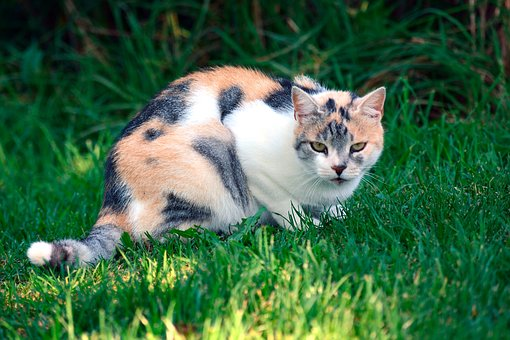 Cat, Colorful, Pet, Nature, Animal World, Adidas