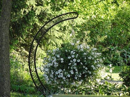 Hanging Planter, White Flowers, Petunia, Geraniums