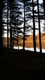 Backlit, Spring, Pondside, Pinetrees