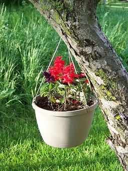 Planter, Hanging, Decorative, Potted, Plants, Summer