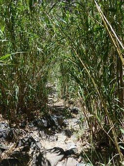 Away, Path, Thicket, Scrub, Reeds, Schilrohrdickicht