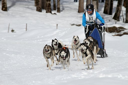 Sled Dog Racing, Musher, Competition
