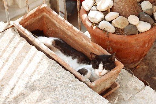 Cat, Sleep, Vase, Planter, Stairs, White, Nero, Pet