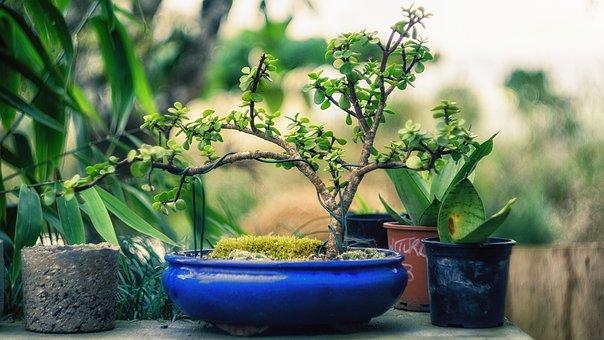 Plant, Bonsai, Tree, Green, Nature, Small, Gardening