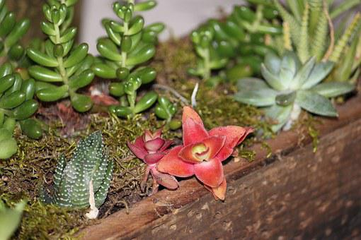 Succulent, Centerpiece, Garden, Planters, Nature