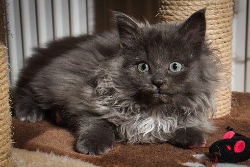 Cat, Kitten, Animal, Pet