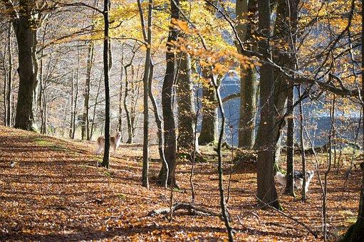 Autumn, Lygnern, Book, Tree, Leaf, Autumn Leaves, Dog