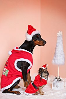 Doberman, Yorkshire Terrier, Dogs, Santas, Christmas