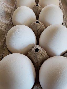 Eggs, Dozen, Food, Carton, Egg, Raw, Breakfast, Protein