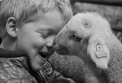Lamb, Child, Sheep, Animal, Nature, Cute, Easter, Young