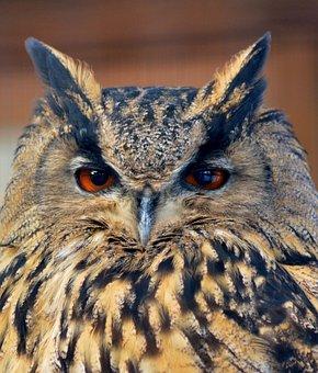 Eagle Owl, Animal World, Eyes, Wild Bird, Nature