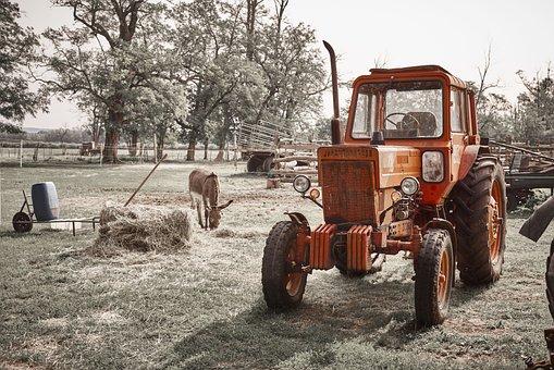 Tractor, Farm, Donkey, Red, Hay