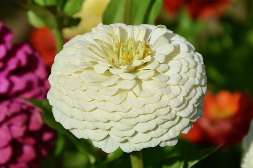 Flower, Plant, Bouquet Offer, Nature, White Flower