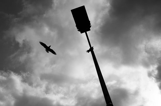 Bird, Black And White, Mono, Flight, Flying