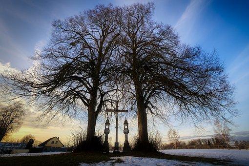 Winter, Tree, Landscape, Snow, Nature, Frosty