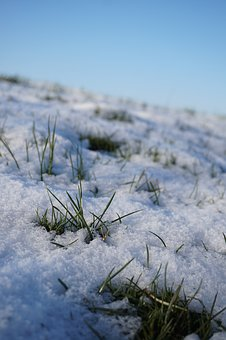 Winter, Nature, Snow, Cold, Wintry, Frozen, Frost, Ice