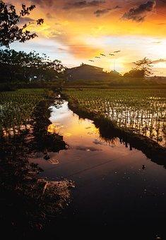 Sunset, Golden Hour, Sun, Rice Fields, Water, Golden
