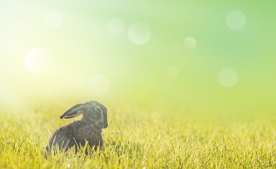 Hare, Easter, Meadow, Spring, Sun, Grass, Animal