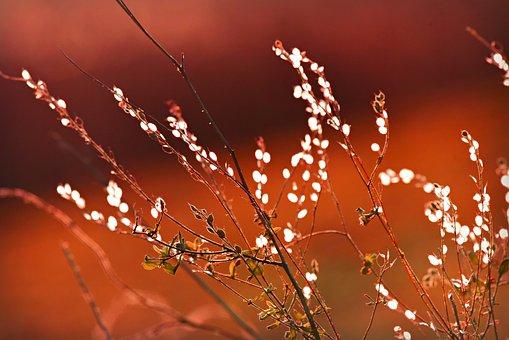 Plant, Stem, Stalk, Leaf, Nature, Growth, Botanical