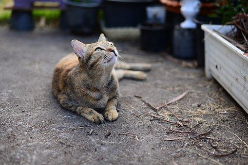 Tabby, Cat, Cute, Cats, Kitten, Pet, Animal, Feline