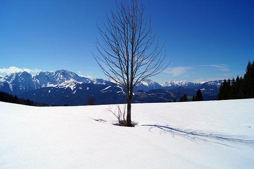 Lonely, Tree, Loneliness, Landscape, Nature, Snow