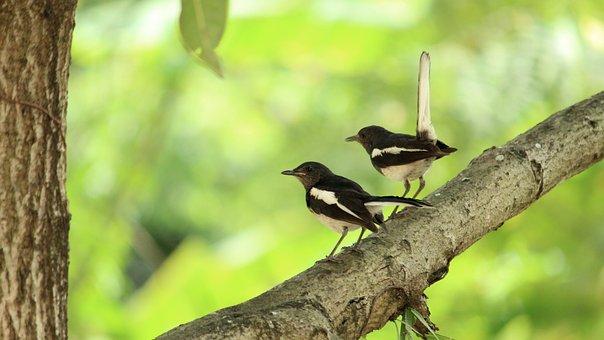Kerala, India, Bird, Avian, Pair, Mother, Child, Little