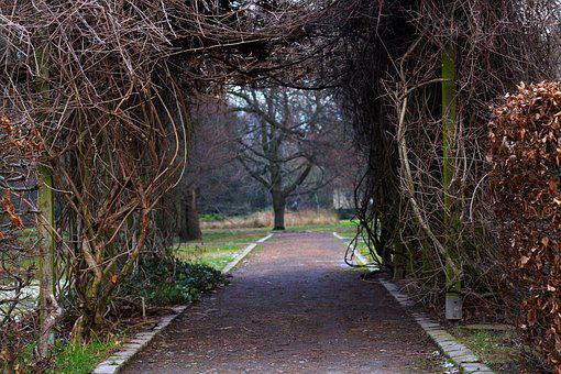 Park, Away, Aesthetic, Shrubs, Branches, Nature, Botany