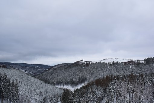 Snow, Forest, Winter, Wintry, Pine, Snowfall, Snowy
