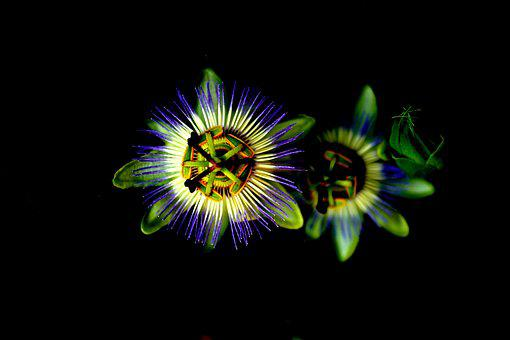 Flower, Green, Violet, Purple, Nature, Beatiful, Summer