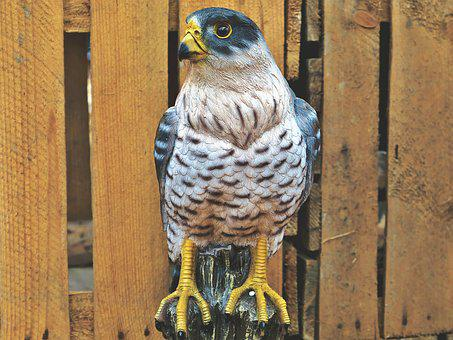 Falcon, Bird, Bird Of Prey, Raptor, Deco, Decoration