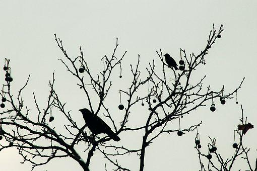 Raven, Blackbird, Bird, Tree, Sit, Crow, Black