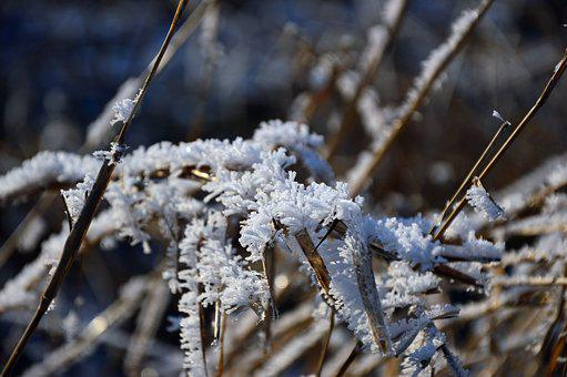 Ice, Eiskristalle, Ripe, Hoarfrost, Frost, Cold, Winter
