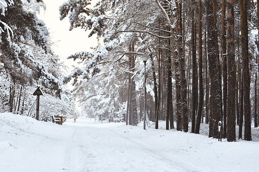 Wintry, Scenic Landscape, Snowy, Pine Forest