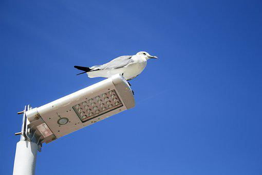 Seagull, Ave, Animals, Sky, Road Lamp