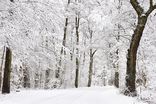 Winter, Wintry Forest, Snowy Forest, Hoarfrost, Forest