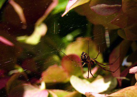 Spider, Web, Flowers, Nature, Hydrangeas, Colors