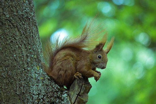 Squirrel, Tree, Animal, Rodent, Nature, Animal World
