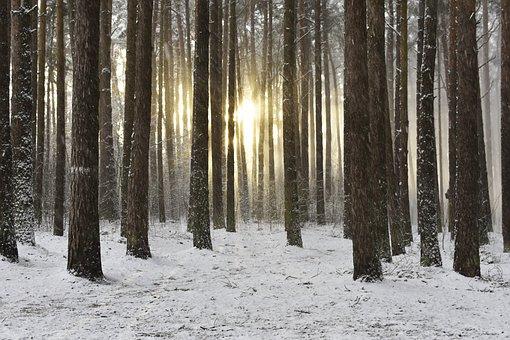 Woodland, Snow, Winter, Sunrise, Wintry Sunrise