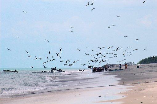 Beach, Panama, Pacific, Sea, Landscape, Tourism, Walk