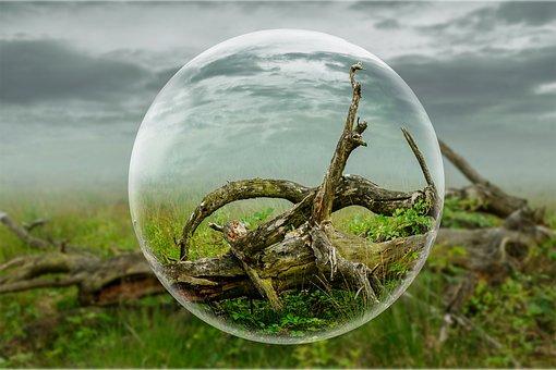 Globe, Tree, Ground, Wood, Light, Sky, Dead Tree