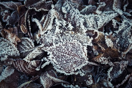 Leaves, Frost, Winter, Frozen, Hoarfrost, Nature, Cold