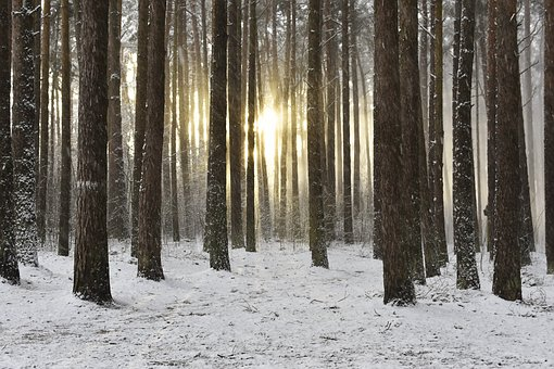 Woodland, Snow, Winter, Sunrise, Wintry Sunrise