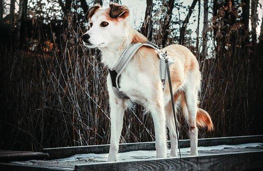 Dog, Animal, Doggy, Portrait, Coat, Snout, Friend