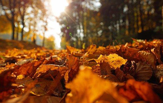 Indian Summer, Backlighting, Leaves, Atmospheric